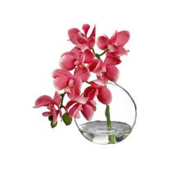 Орхидея фаленопсис в вазе