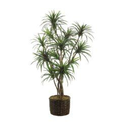 дерево Юкка